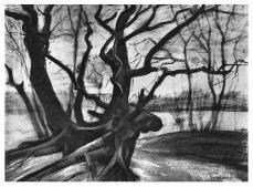 Vincent van Gogh; Study of a Tree; 1882; crayon, pencil, watercolor, lightly washed; 48.9 x 68.6 cm; Kröller-Müller Museum, Otterlo, Gelderland, Netherlands