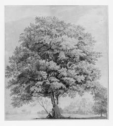 Paul Sanby; Study of a Tree: Windsor Castle in the Distance; c.1780s; watercolor, pen and ink over pencil on paper; Ashmolean Museum