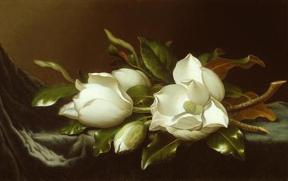 Martin Johnson Heade; Magnolias on Light Blue Velvet Cloth; c.1885-95; oil on canvas; 38.6 x 61.8 cm
