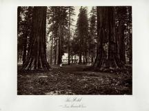 Carleton E. Watkins; The Hotel from mammoth Grove; c.1876; albumen silver print from glass negative; The Metropolitan Museum of Art