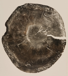 Gill 97 yr old norway spruce, lightning rod