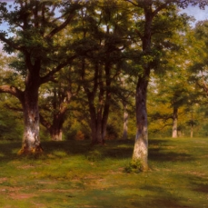 Rosa Bonheur; Forest of Fontainebleau- Spring in the Woods; 1860-1865