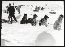 Scott, R F Antarctic , October 1911. Probably Demetri Gerof training a dog team.