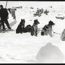Scott, R F Antarctic , October 1911. Probably Demetri Gerof training a dog team.