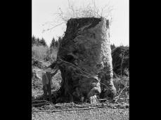 Robert Adams; Old-growth Stump, Coos County, Oregon; 1999-2003