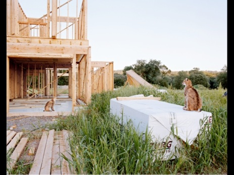 Amy Stein; New Homes; Part of 'Domesticated' series