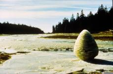 Andy Goldsworthy; Rivers and Tides; 2000; Exhibited at Galerie Lelong, Fall 2002 - Winter 2003