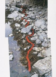 Andy Goldsworthy; Japanese maple/ leaves stitched together to make a floating chain/ the next day it became a hole supported underneath by a woven briar ring; 1987; Ouchiyama-Mura, Japan