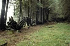 Andy Goldsworthy; Sidewinder: Oblique View in Forest; 1985; Grizedale Forest Park, Cumbria