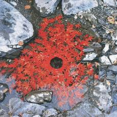 Andy Goldsworthy; Japanese maple/ leaves stitched together to make a floating chain; the next day it became a hole supported underneath by a woven briar ring; 1987; leaves, water; Ouchiyama-Mura, Japan