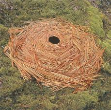 Andy Goldsworthy; Bracken; 1988; Borrowdale, Cumbria