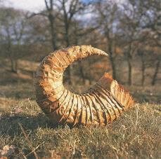 Andy Goldsworthy; Sweet chestnut/ autumn horn; 1986; Penpont, Dumfriesshire