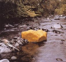 Andy Goldsworthy; Scaur Water, Yellow Elm Leaves, Laid Over a Rock, Low Water; 20th century; Dumfriesshire, Scotland