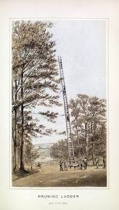 Calvert Vaux; Reports of Park Commissioners of the City of Brooklyn; 1861-1872; drawing