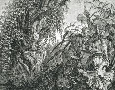 Carl Wilhelm Kolbe, A Tree with Giant Vegetation, etching 1820