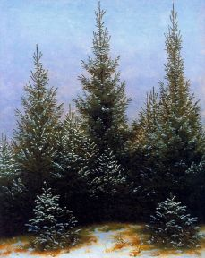pine thicket