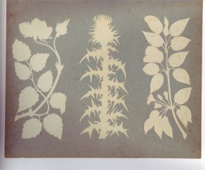 rose thistle pear silhouette