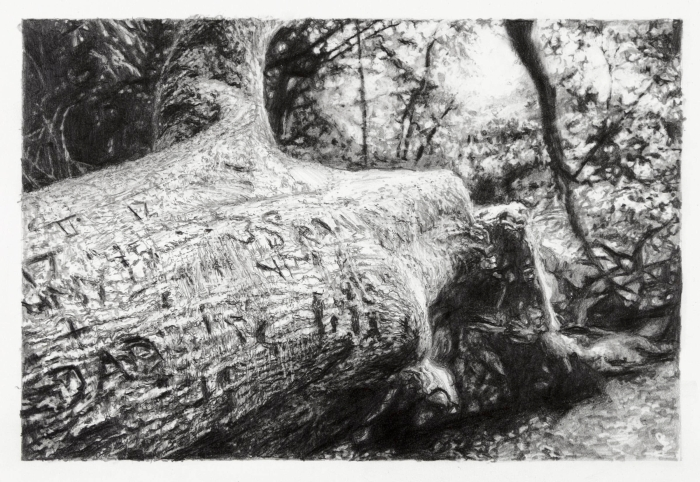 Celia de Serra The Dad Tree Pencil 2014 copy