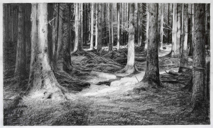 Celia de Serra The Dark Woods Pencil 2014