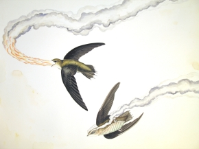 "Justin Gibbens Bird of Paradise XVI- Fire-breathing Chimney Swift Watercolor, graphite, gouache, oolong tea on paper 2008 23"" x 30"""