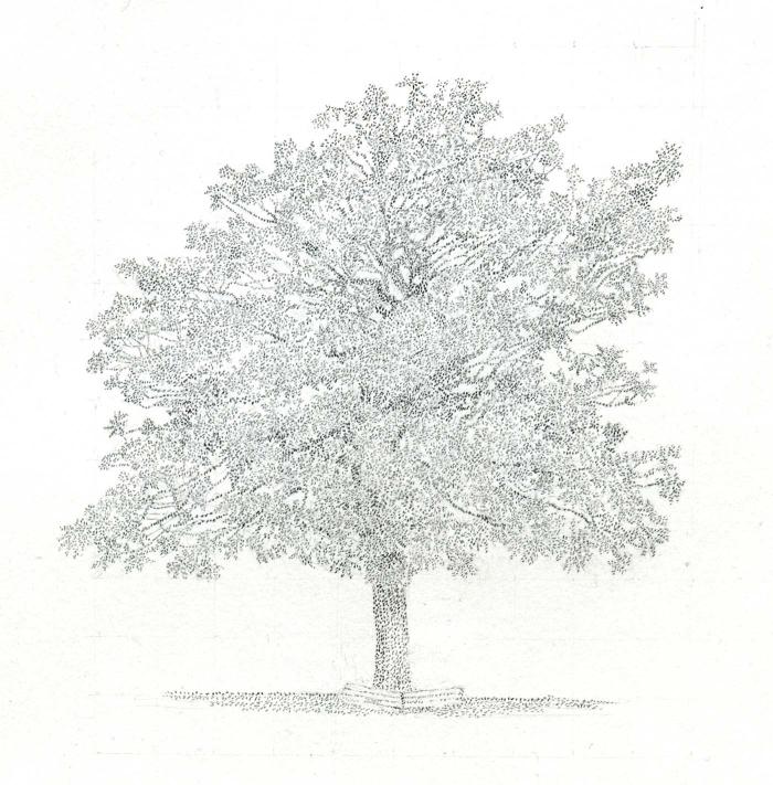 Harker Magnolia 2012 copy
