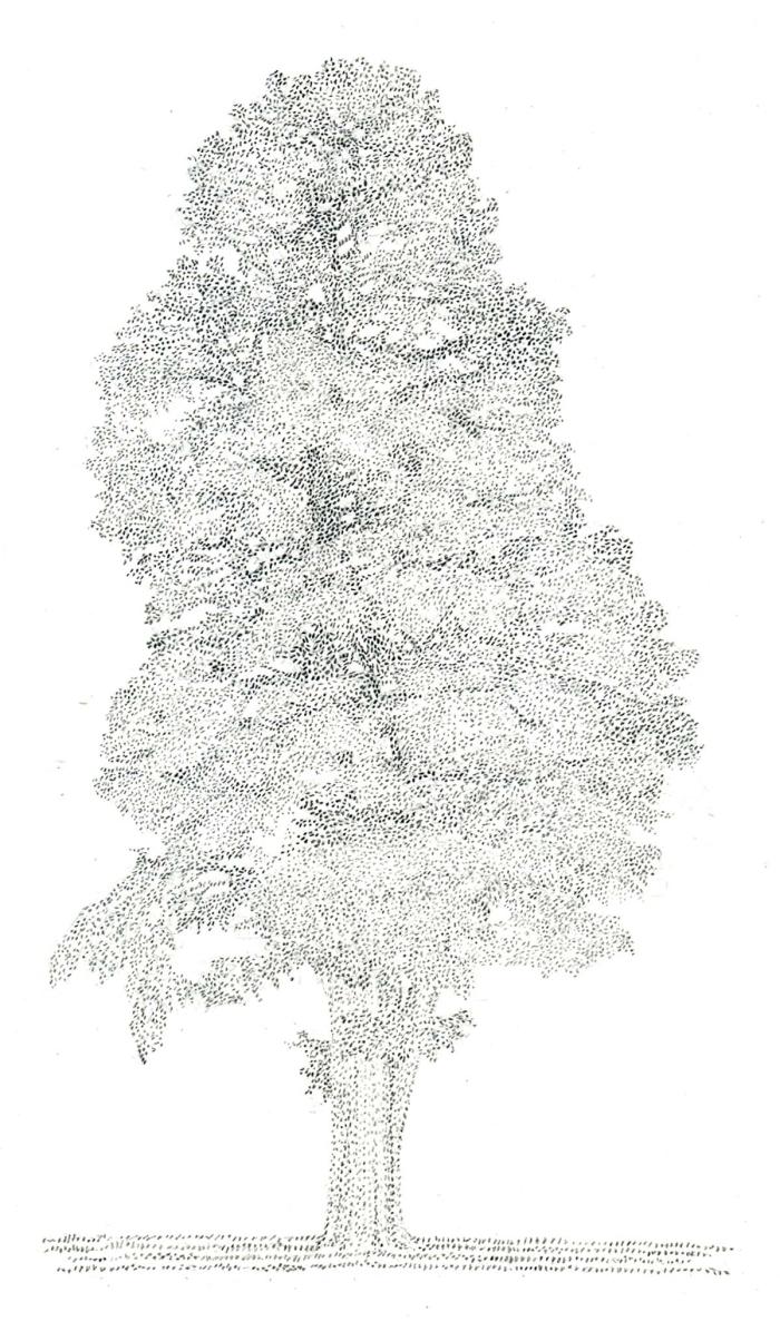 Harker Sawmp Cypress 2012