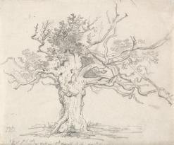 James Ward, A Stunted Oak, Graphite on medium, smooth, cream wove paper, 7 3/8 x 8 7/8 inches (18.7 x 22.5 cm), 1822.