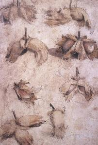 Giovanni, da Udine. Studies of Nuts, brush and wash, watercolor over traces of black chalk, 268 x 180 mm, 16th C.