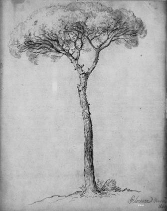 Casilear, A Tree - Florence, graphite, 1840