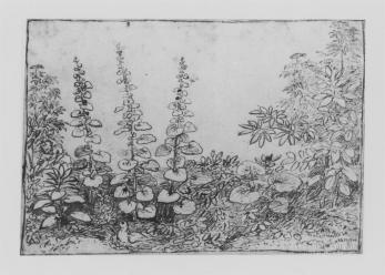 Claude Lorrain, Flowers and foliage with dove, pen and ink, 1669, 14.9 x 21.4 cm.
