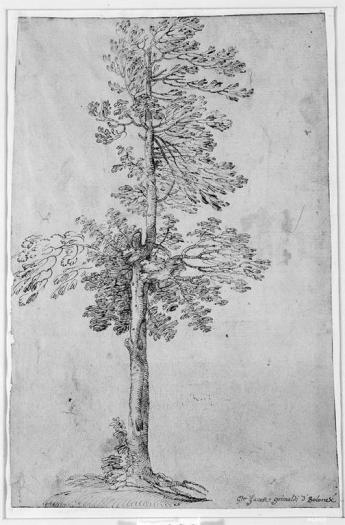 G. F. Grimaldi, A Tree, 11.75 x 8.75 in., 17th C.