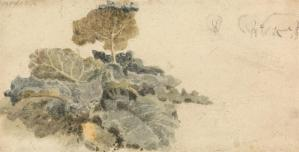 attr. Peter De Wint, Study of Burdocks, drawing and watercolor, n.d., 9.2 x 17.8 cm
