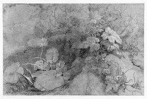 Richard Wilson, Wild Plants, 18th C., black and white chalk on paper, 290 x 440 mm