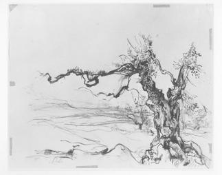 Anna Ticho, Tree, drawing, 1964, pencil on paper