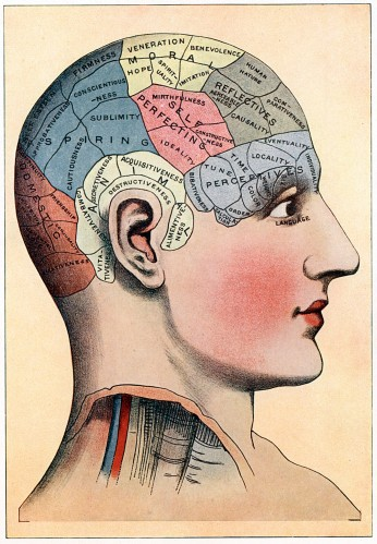 A phrenology chart, circa 1920, Oxford Science Archive/Print Collector/Getty Images.