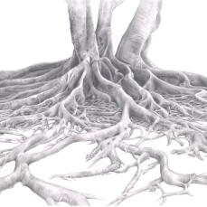Susan Benjamin, Moreton Bay Fig (Marie Selby Botanical Gardens, Sarasota, Florida) Graphite on paper, 12 x 17 in