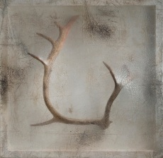 Sonya Kelliher-Combs, Remnant (Caribou Antler), 2016